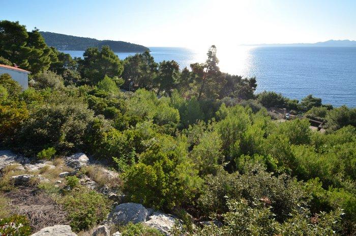 Građevinsko zemljište 50 metara od mora Vinačac - Korčula - gradjevinsko zemljiste vinacac 02