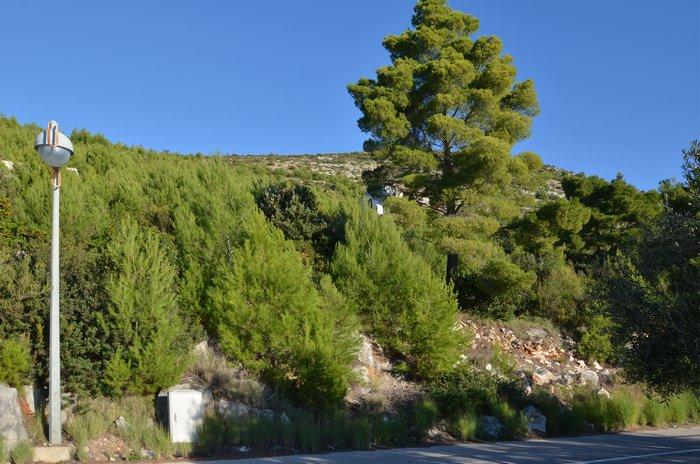Građevinsko zemljište 50 metara od mora Vinačac - Korčula - gradjevinsko zemljiste vinacac 05