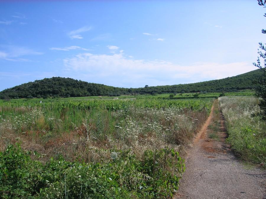 Poljoprivredno zemljište - vinograd Smokvica Prapatna - vinograd korcula smokvica prapatna 01